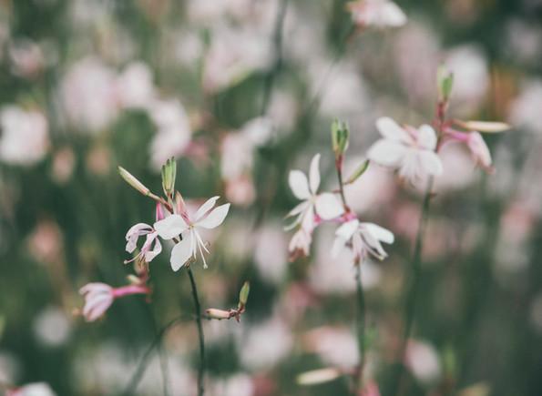 soft--green-white-flower.jpg