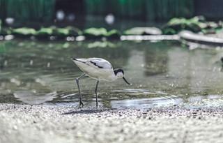 The-bird-(37).jpg