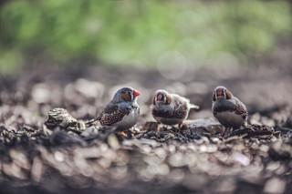 The-bird-(38).jpg