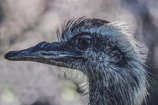 The-bird-(72).jpg