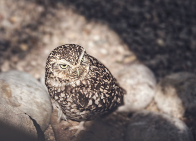 The-bird-(66).jpg