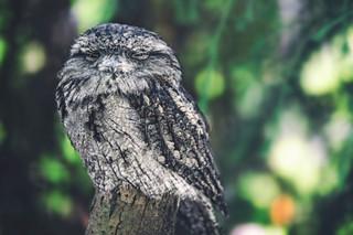The-bird-(71).jpg