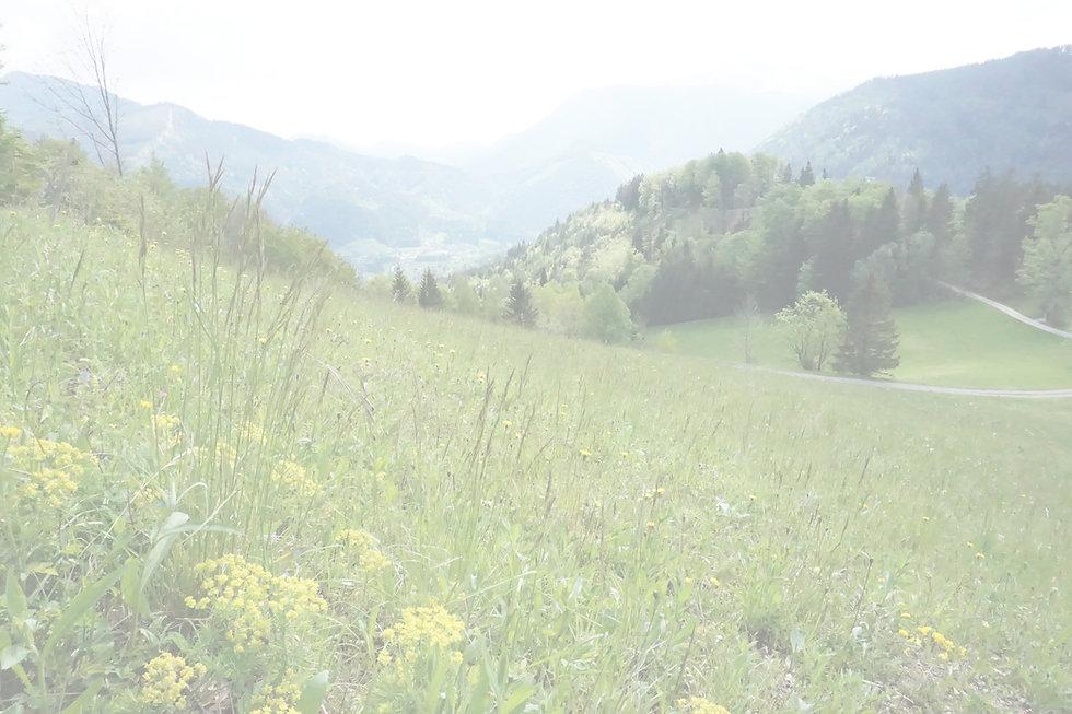 Obersberg_edited.jpg