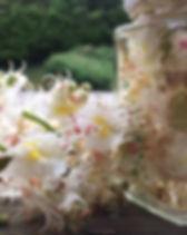 Kastanienblüte_10.JPG