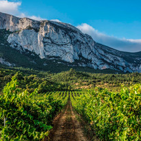 pujanza vineyard 3.jpg