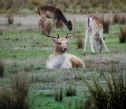 Deer_web.jpg