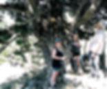 cypress5.jpg