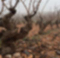 vines_web.jpg