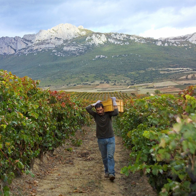 Valdepoleo Harvest.jpg