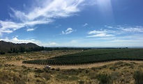 MosquitaMuerta_Vineyards2_web.jpg