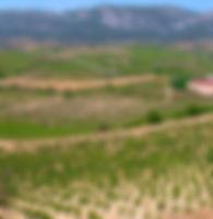 ribera-del-duero-spain-vinamericas.jpg