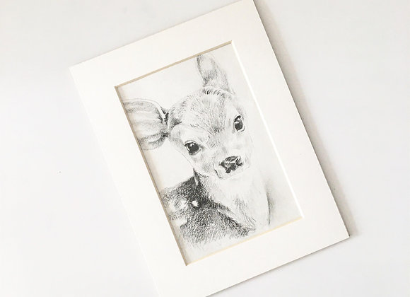 Baby Fawn Drawing