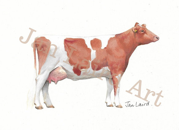 Ayrshire Cow side View(unframed)