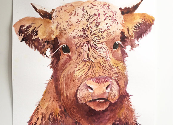 Highland Cow Watercolour Study