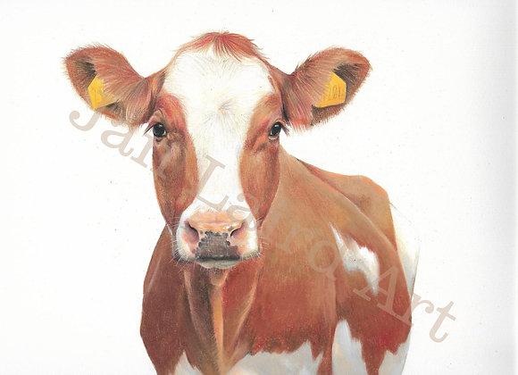 Ayrshire Cow (unframed)