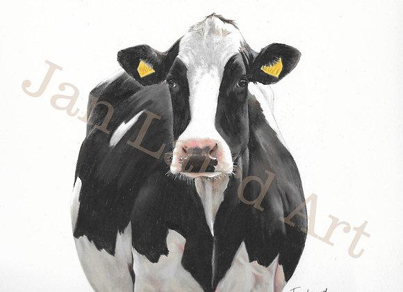 Black & White Holstein (unframed)