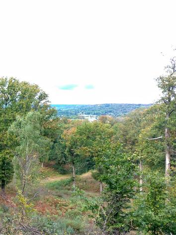 La forêt de Coye-la-Forêt