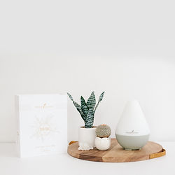 Dew Drop Premium Starter Kit | Premium Starter Kit with Dew Drop Diffuser | Young Living Premium Starter Kit | Young Living Seattle | Ellie Baker Essential Oils