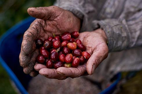 farmer with coffee in hands.jpg