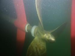 船底確認、潜水調査、プロペラロープ、