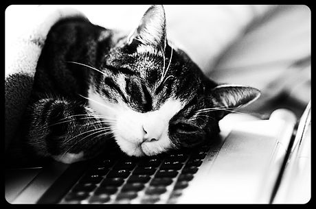 cat taking a quick power nap on laptop_e