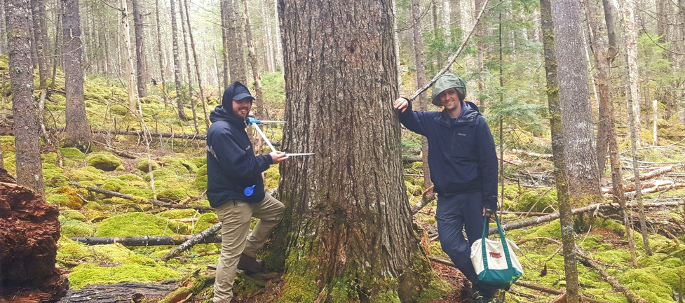 Old Growth Assessments