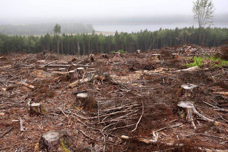 Another habitat-fragmenting clearcut
