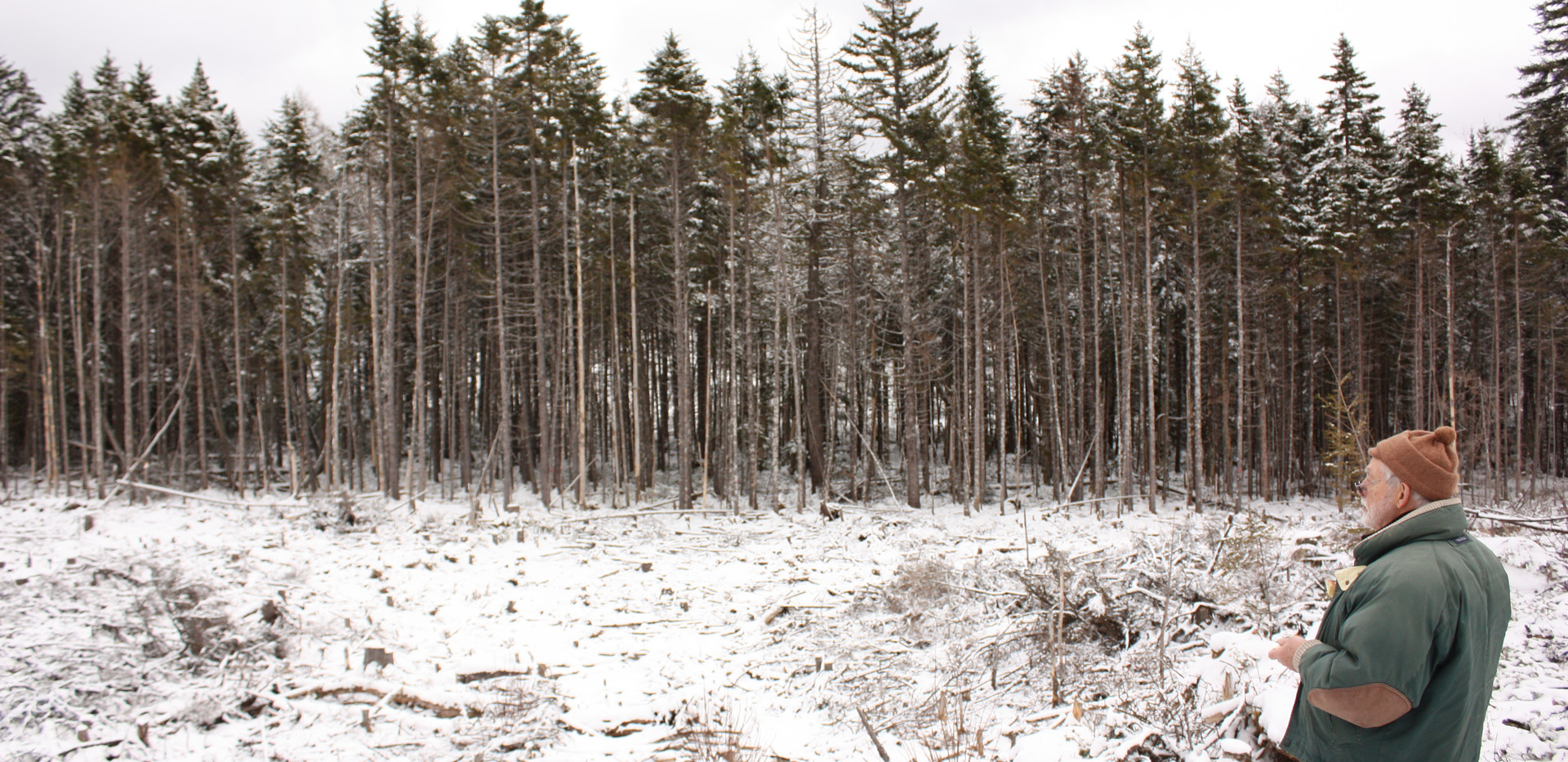 A clearcut found within the area