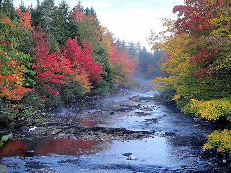 fall colours_gov credit .JPG