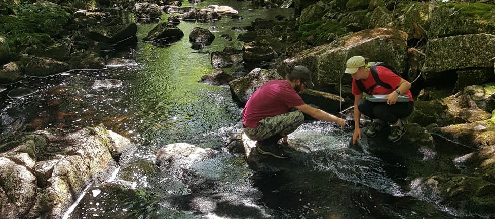 Our Habitat Restoration Technicians at Work