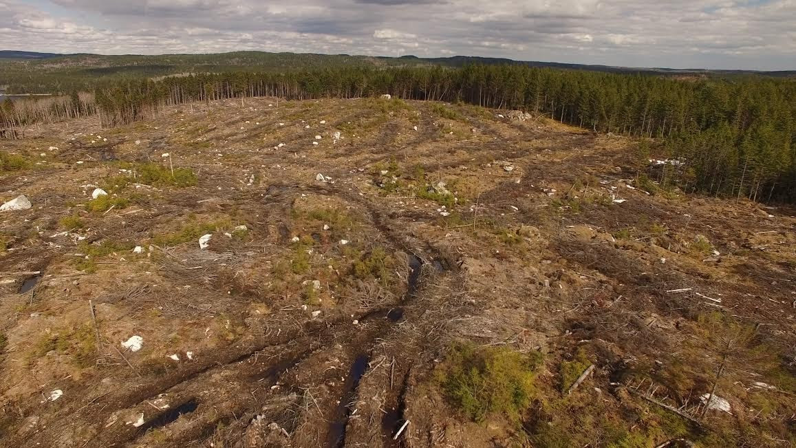 A roughly 75 acre clearcut adjacent to Big Indian