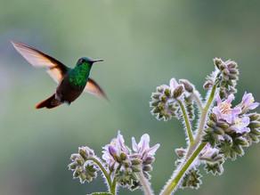 Proyecto fotográfico ayuda al cuidado de la fauna endémica en CDMX