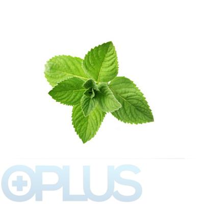 Oplus Menthol 10ml
