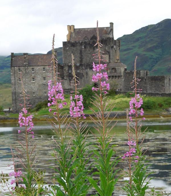 Eilean Donan Castle in July