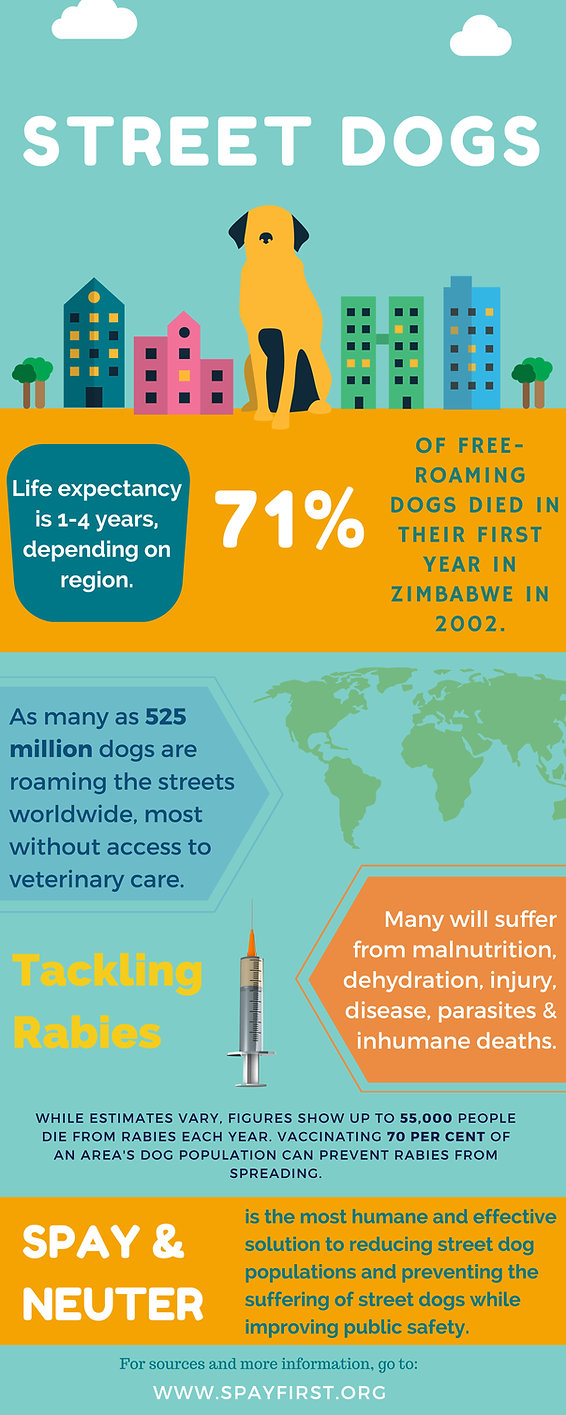 SpayFIRST_Infographic_2015_STREET-DOGS.j