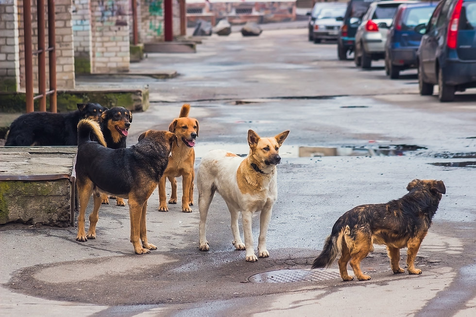Stray dogs on street makes fear people.j