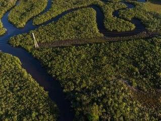 Amazzonia: al via il più grande progetto di riforestazione