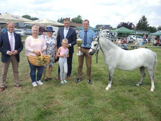Großer Auftritt von Welsh Ponys und Züchtern auf dem Stäkamp Rechterfeld