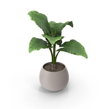 potted-plant-flower-pot-3yL3PzE-600.jpg