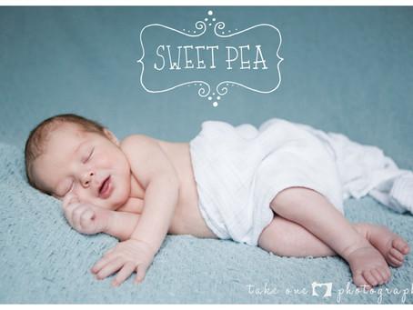 Newborn Christmas Photo Shoot