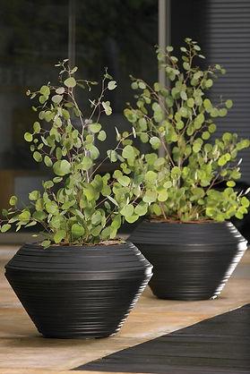 indoor plants in office