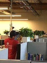 worker watering plants in office
