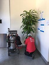 worker installing plants in office