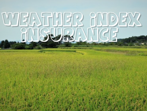 Weather Index Insurance