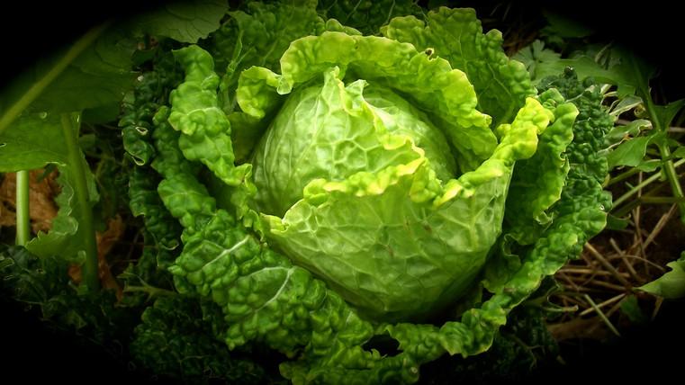 Envie de salade?