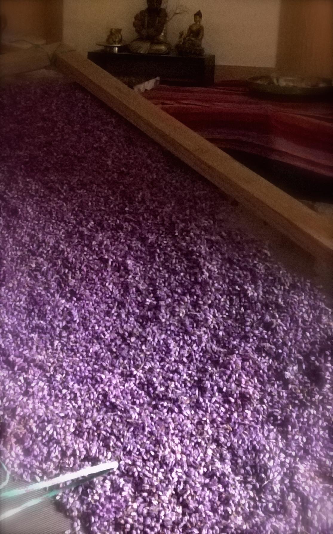 bruyère au séchage