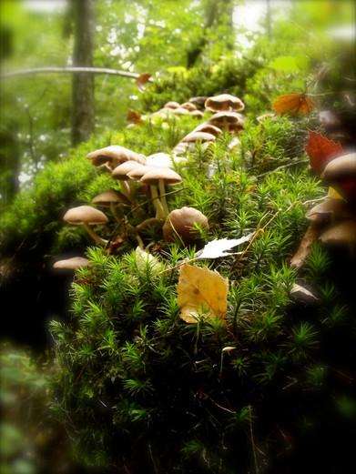 Douceur de la forêt