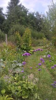 Cueillette dans le jardin