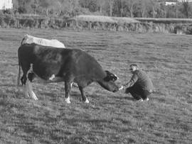 L'amour est dans le Beef