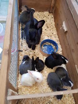 Our pet rabbits